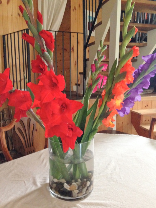 Gladioli from Hubby