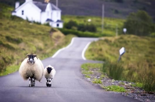 British Highlands